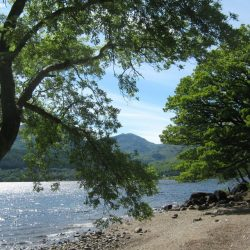 Loch Lomond and Whisky Distillery Half-Day Tour